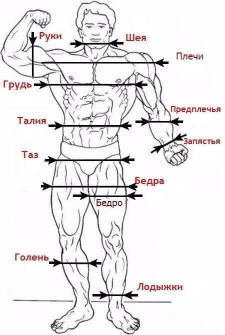Калькулятор идеальных пропорций мужского тела