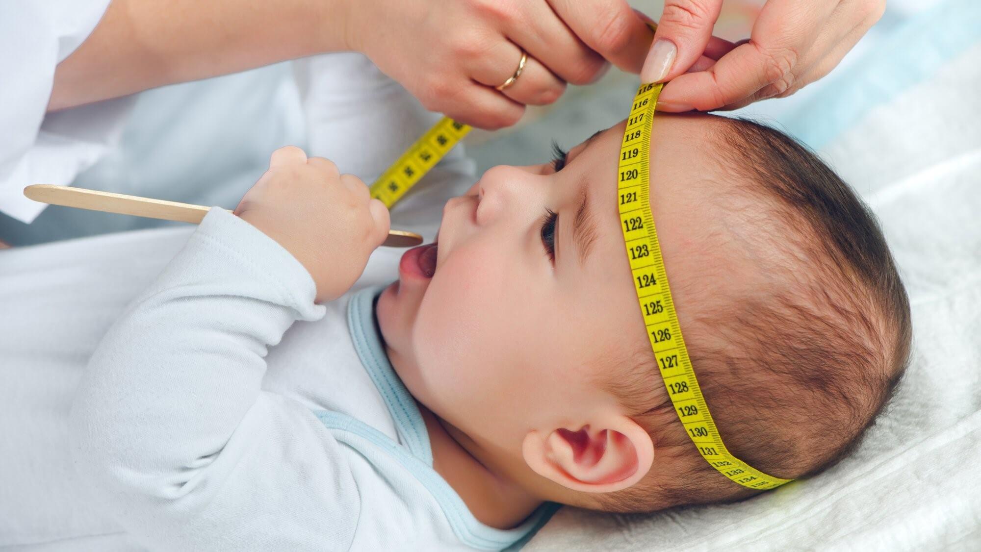 Окружность головы в 7 месяцев