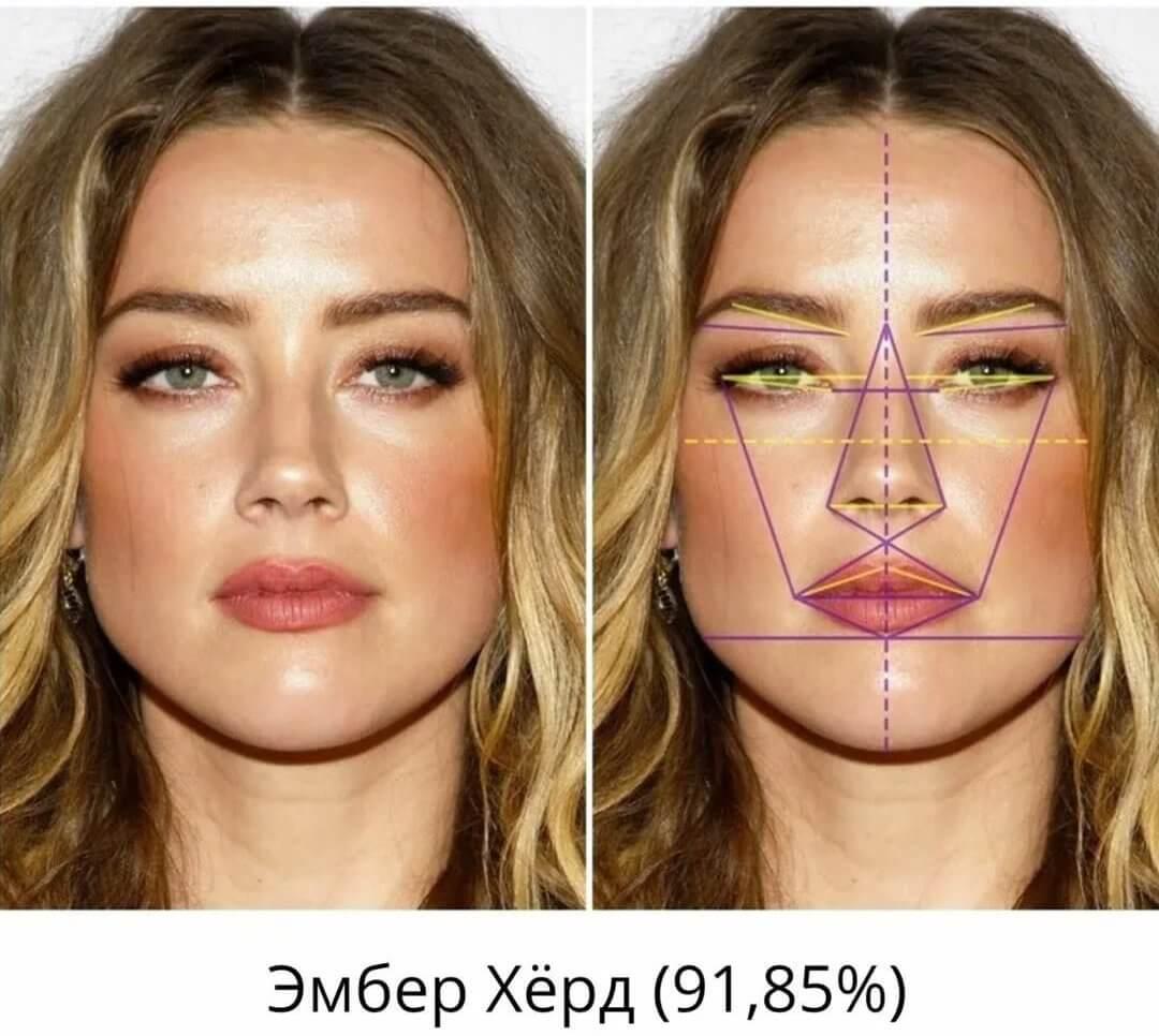 Идеальные пропорции женского лица