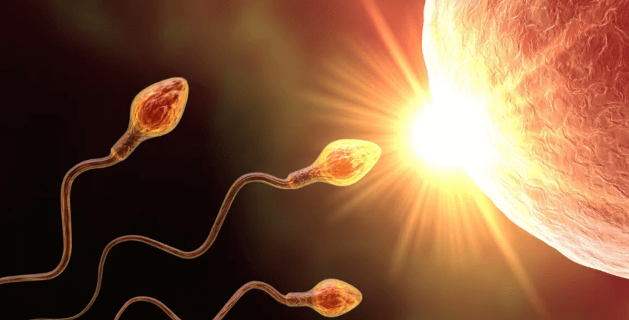 Рекомендации по половым актам для зачатия