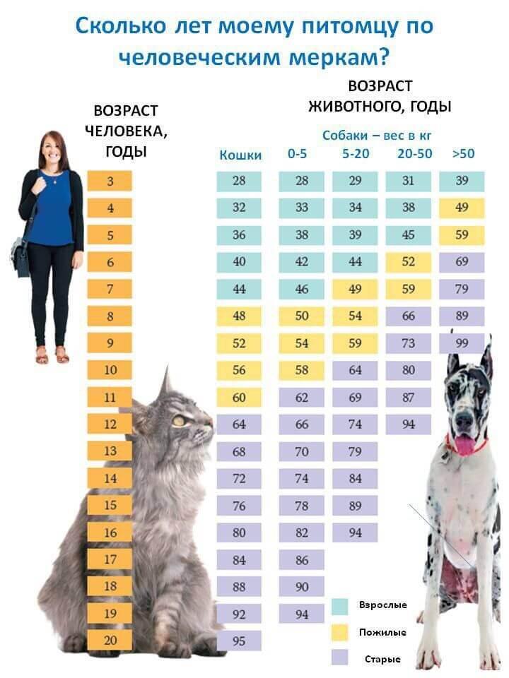 Соотношение возраста человека и собаки, кошки